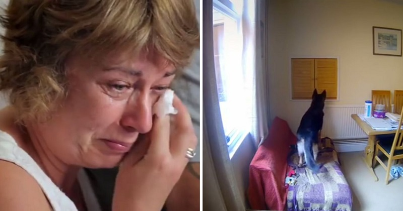 Tutores vão às lágrimas com vídeo de seus cães sozinhos em casa