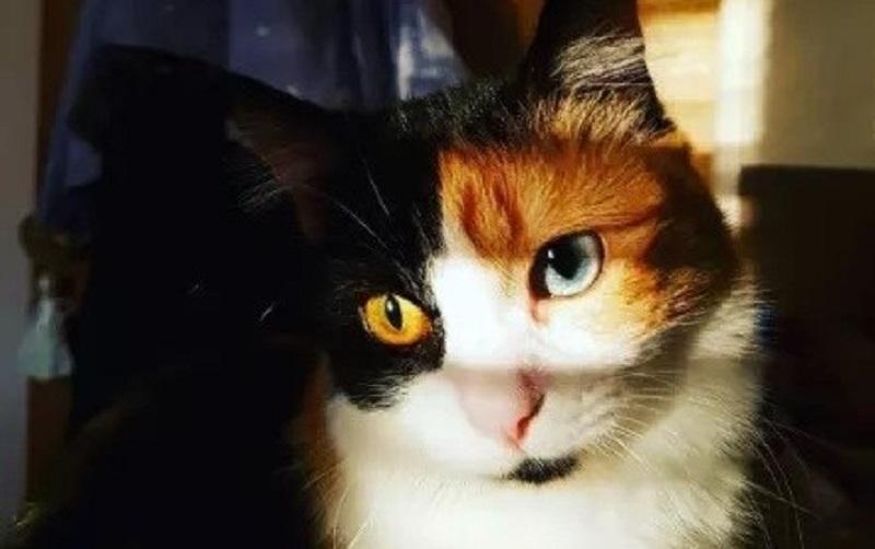 14 gatos mais bonitos que você