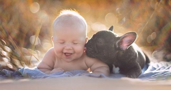 11 lindos exemplos da lealdade canina