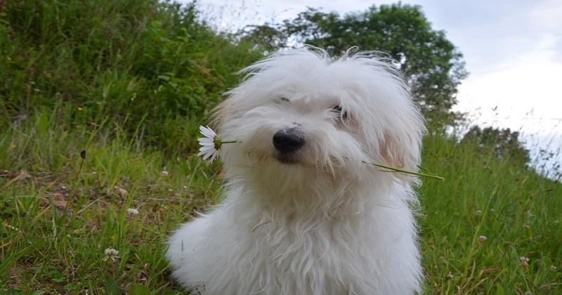 14 sinais que você tem um relacionamento sério com seu cachorro
