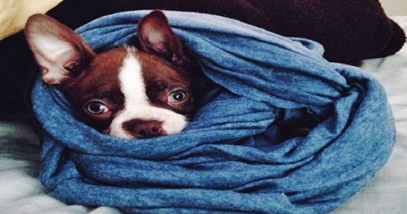 12 cachorros com roupas de inverno
