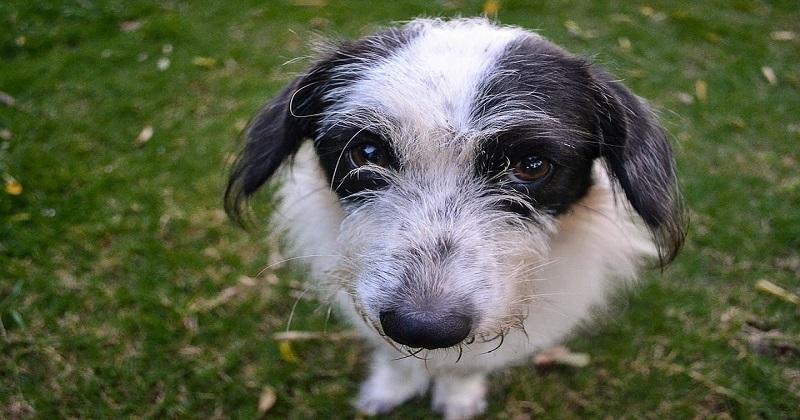 O que você precisa saber sobre desidratação em cachorros