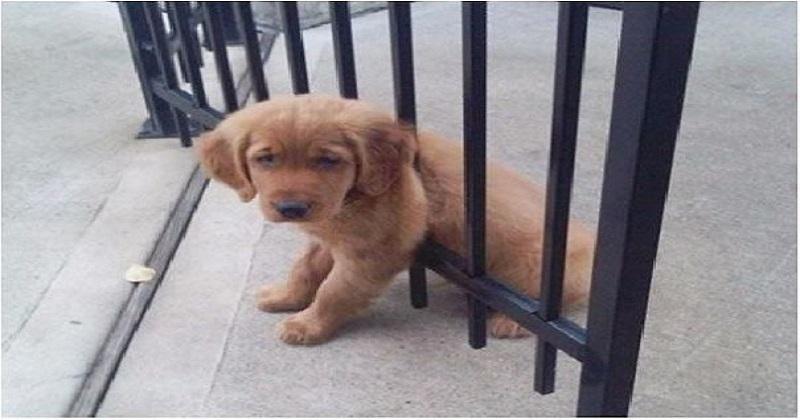 10  cachorros que quebraram as regras