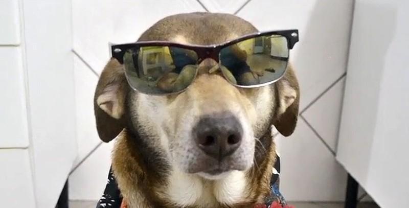 20 cachorros que fazem sucesso no Instagram