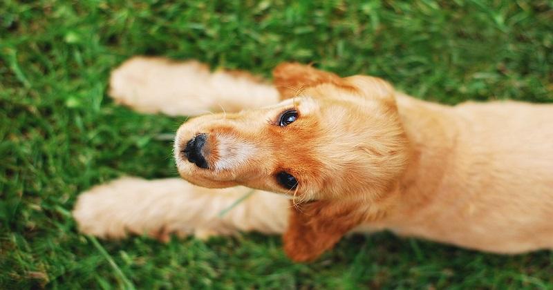11 coisas que você nunca deve dizer a um dono de cachorro