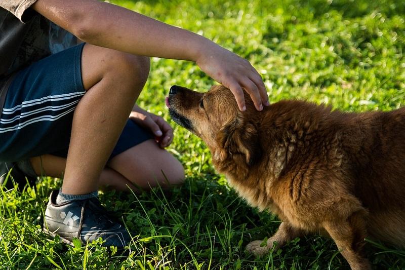 10 coisas que todo dono de cachorro ocupado deve saber