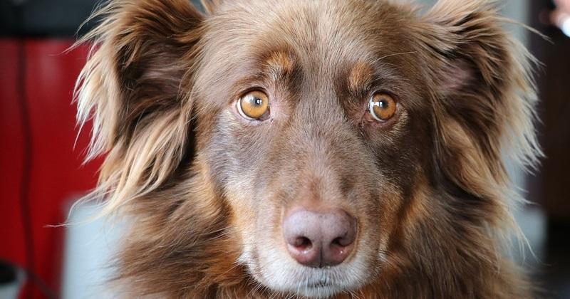 Sinais que você deve levar seu cachorro no veterinário AGORA