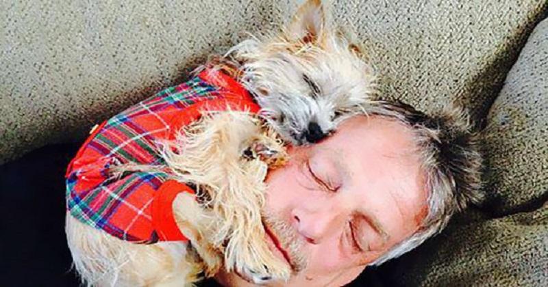 15 pais que não queriam um maldito cachorro