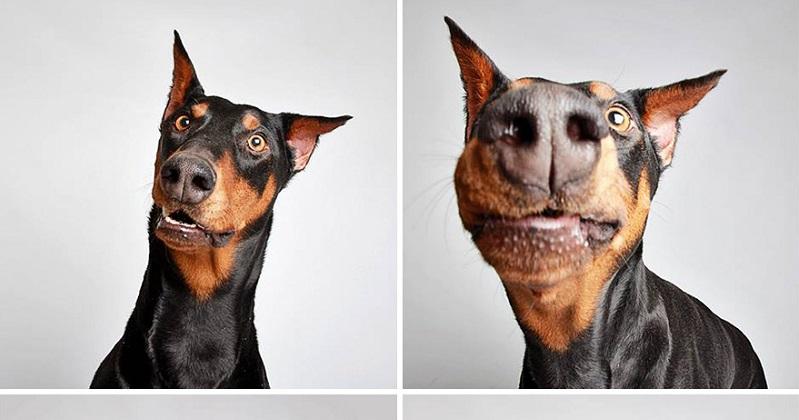 Vazam 9 imagens de cachorros em cabine fotográfica