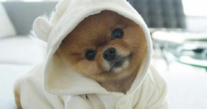 10 cachorros mais amados do que você