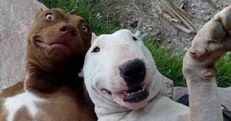 14 melhores fotos de cachorros de todos os tempos