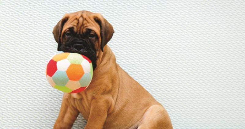 Entenda o papel da recompensa no adestramento de cães