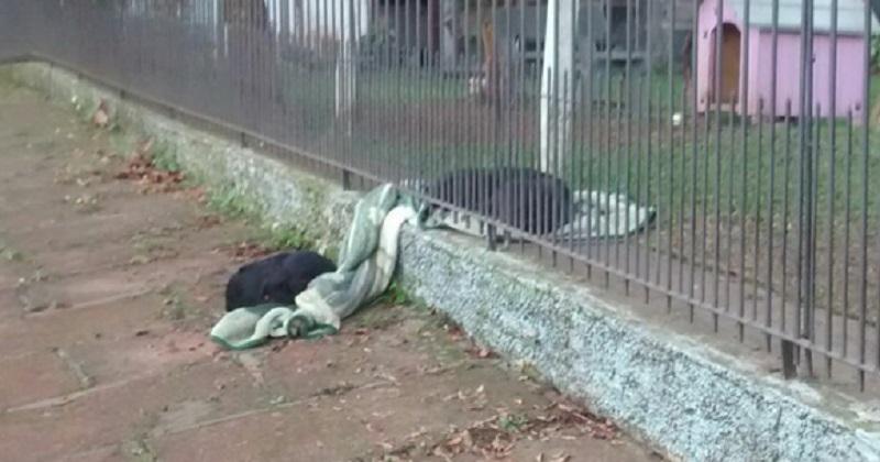 Cachorra dá exemplo de solidariedade compartilhando sua coberta com cãozinho da rua