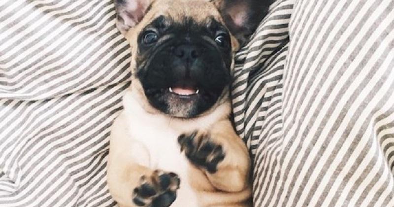 11 cachorros prontos para brincar