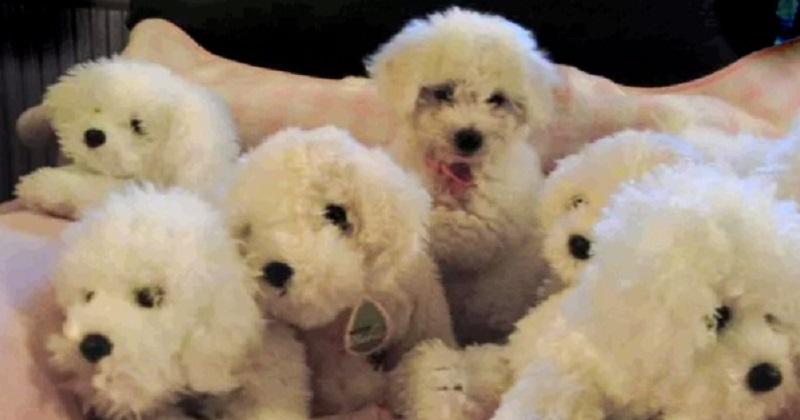 11 cachorros camuflados. Você consegue vê-los?