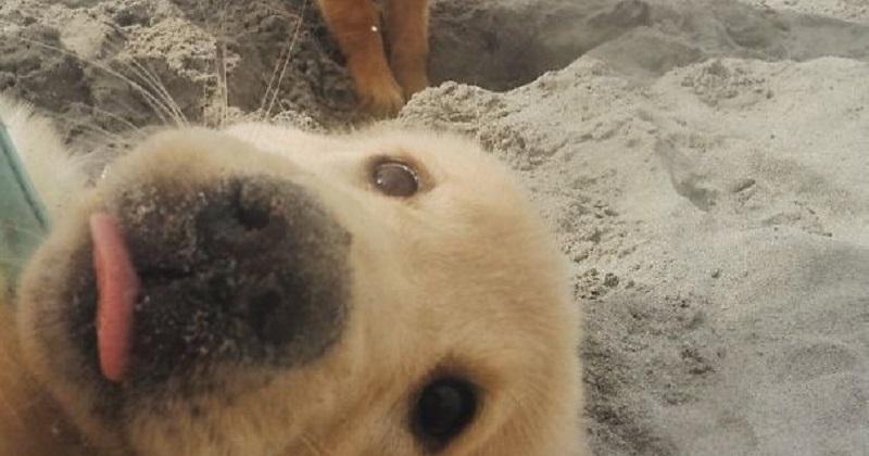 11 cachorros que colocaram o focinho onde não foram chamados
