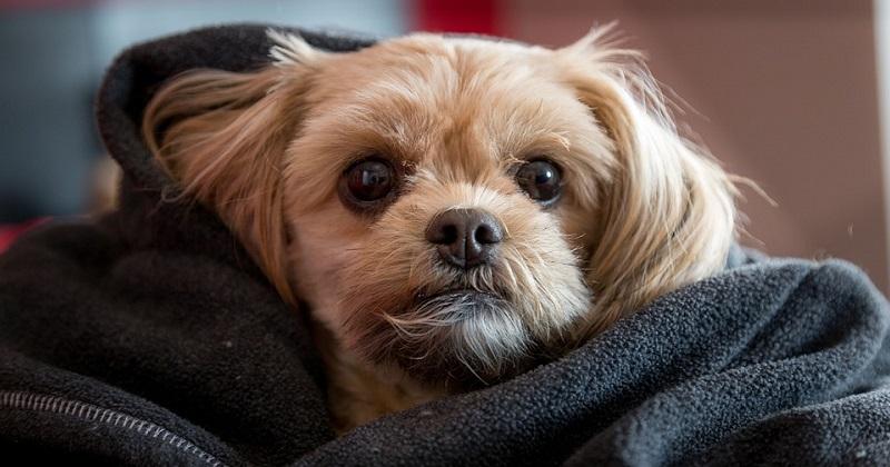 5 maneiras de ajudar seu cachorro a enfrentar seus medos