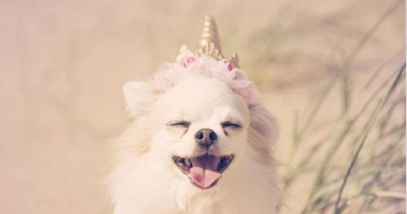 7 provas que cachorros são criaturas mágicas