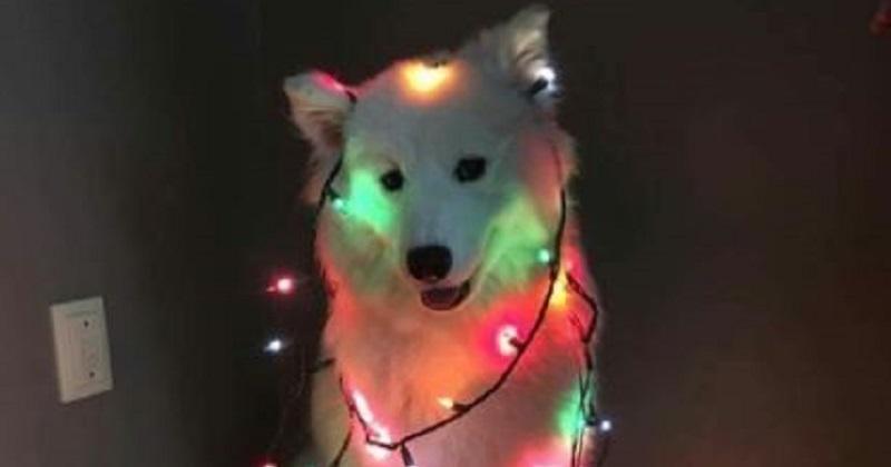 7 cães que literalmente vão iluminar seu dia
