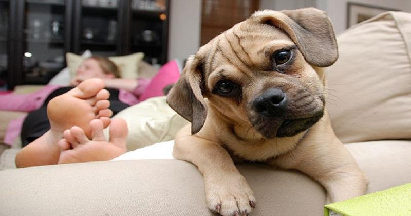 7 dicas MÁGICAS para quem tem cachorro em apartamento