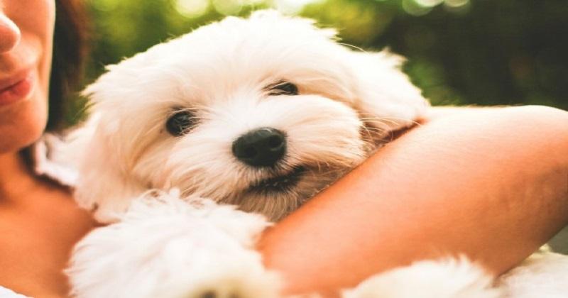 7 razões pelas quais a vida é melhor com um cão