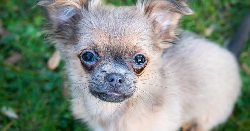 Você sabe quando seu cão está com uma reação alérgica?