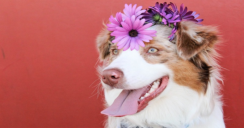 7 fatos mostram que os cachorros não são reais