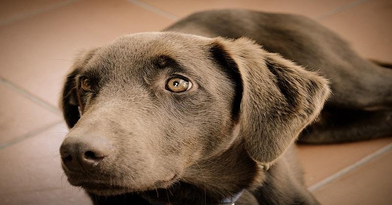 3 coisas que podem ferir os sentimentos do seu cão