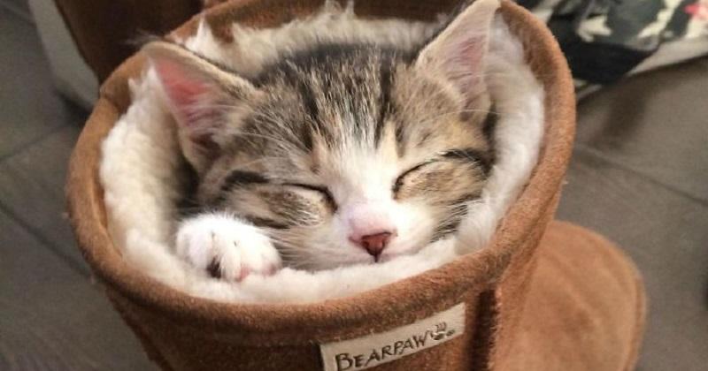 12 gatos que se encaixam em lugares inacreditáveis