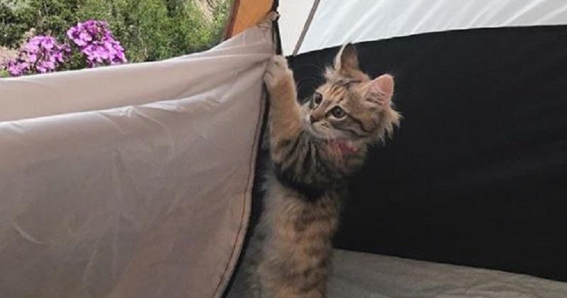 11 gatos mais aventureiros que você