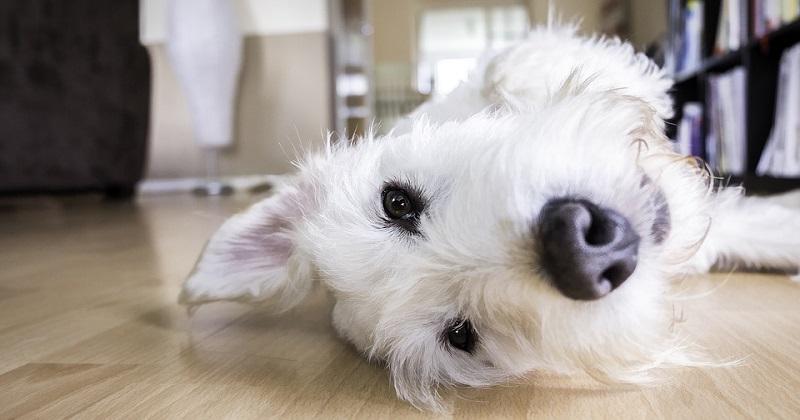 Esta única sugestão tornará a vida com o seu cão muito melhor
