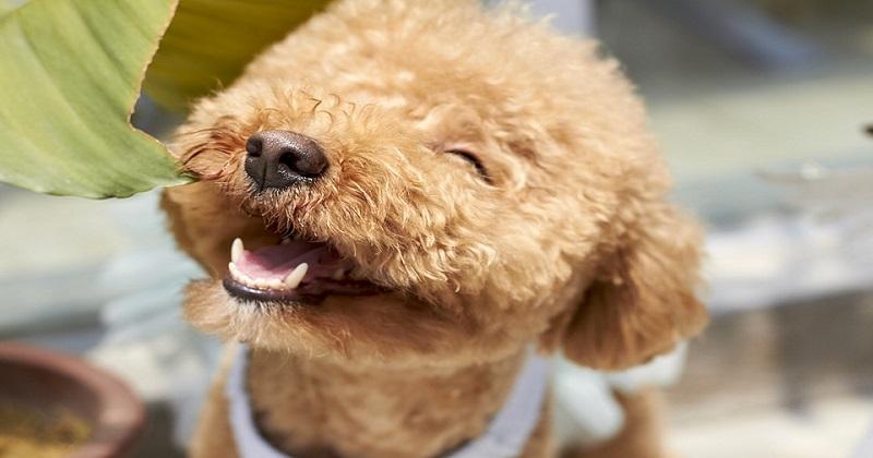 8 maneiras para mostrar o quanto ama seu cachorro HOJE