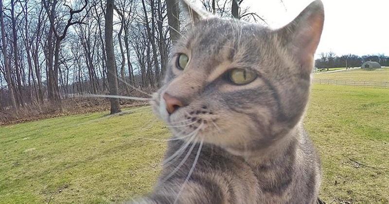 5 dicas hilárias para tirar uma selfie com seu gato