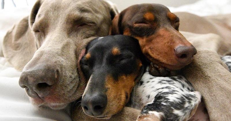 8 cachorros que tiram fotos melhores que você