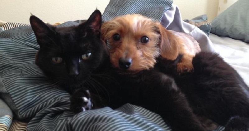 10 cães e gatos vivendo juntos