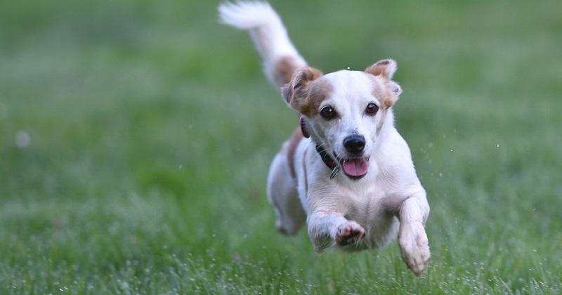 7 ótimos motivos para começar a passear HOJE com seu cão