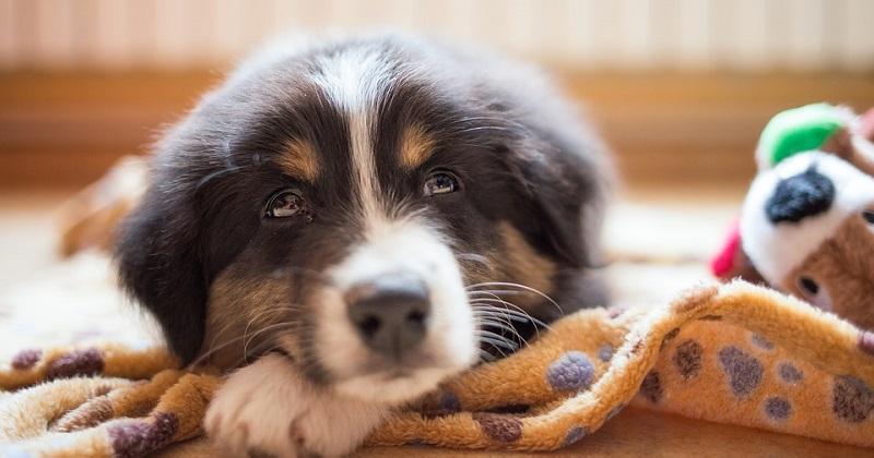 5 dicas para tirar seu cachorro do tédio