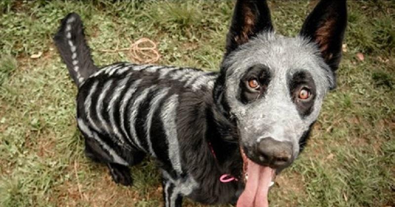 Veja 13 pets prontos para o Halloween