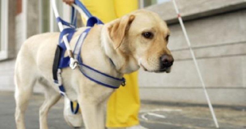 8 coisas que pessoas com cão de serviço gostariam que você soubesse