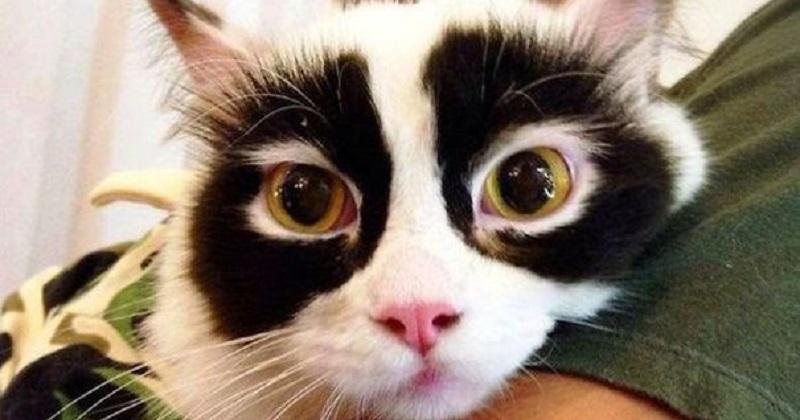 10 gatos com pelagem louca