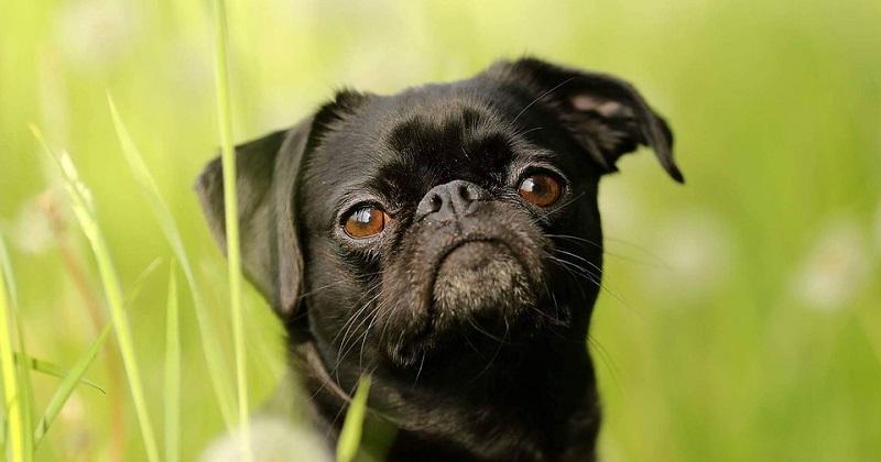 Cães guardam rancor?