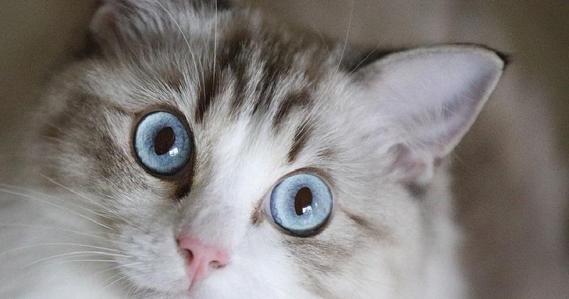 Dicas simples de como deixar sua casa pronta para receber um gato