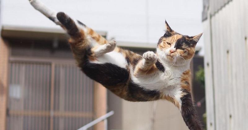 12 fotos de gatos ninjas