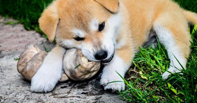 Ossos recreativos para cães: mitos e verdades!