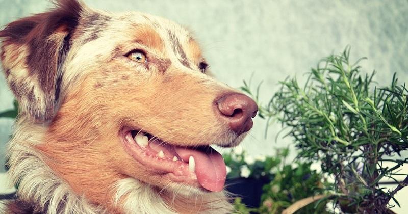5 problemas de saúde dos cães que alimentos funcionais podem resolver