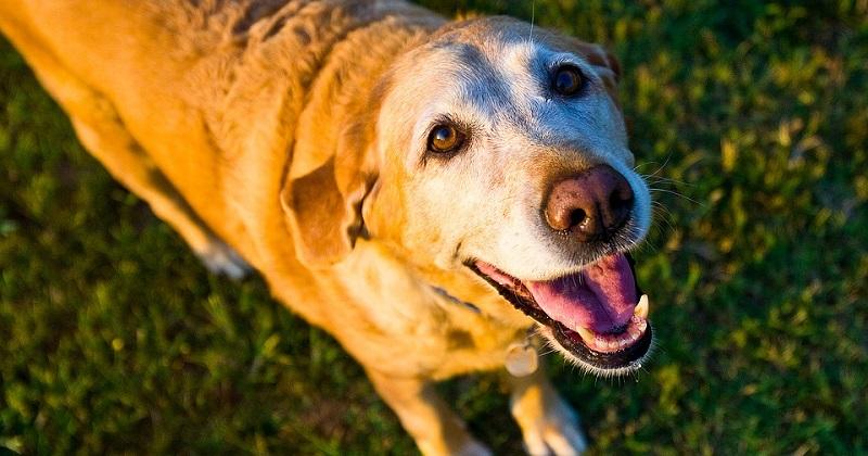 7 dicas para cuidar do seu cachorro idoso