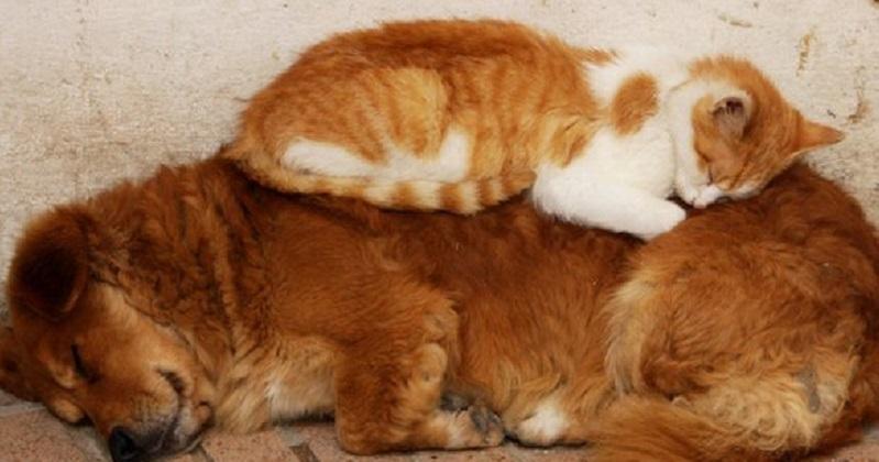 12 gatos que conseguem relaxar em qualquer lugar