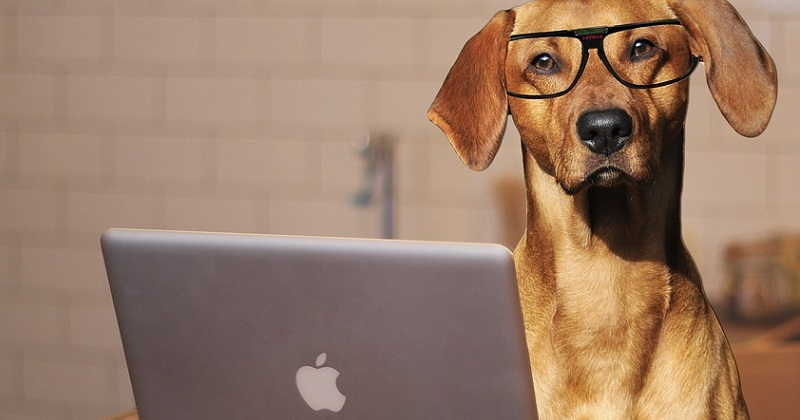 10 melhores profissões para apaixonados por cachorros
