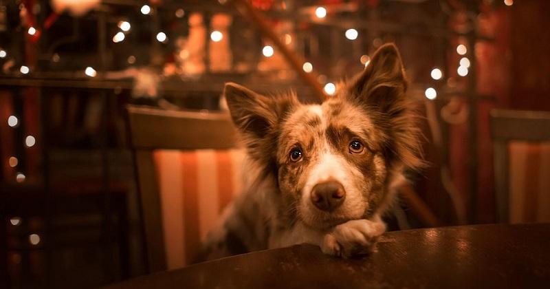 5 maiores medos dos cachorros