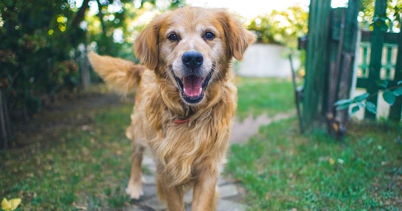 10 motivos para gostar mais dos cachorros do que das pessoas
